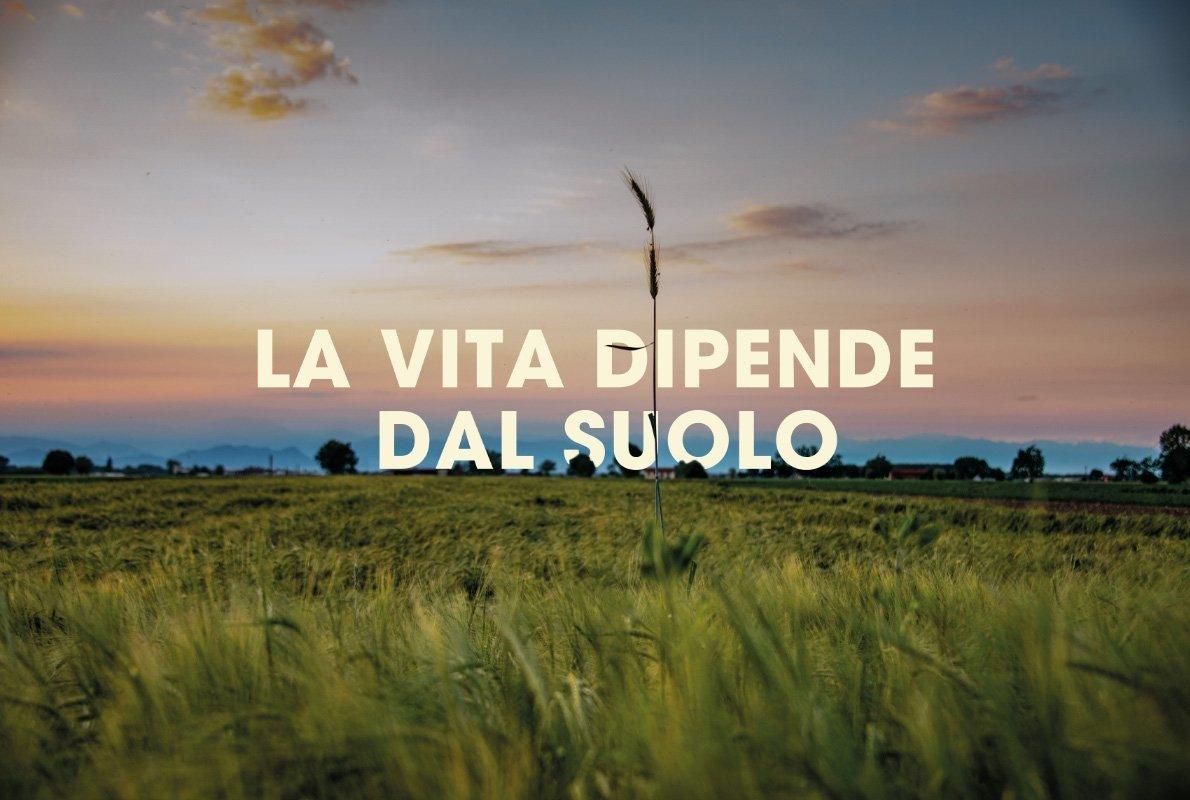 Campo di segale, provincia di Cuneo – Antropocene