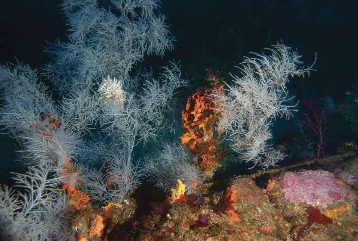Corallo nero, Calabria, Italia – 2021, Antropocene